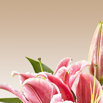Birthday Flowers for Scorpio