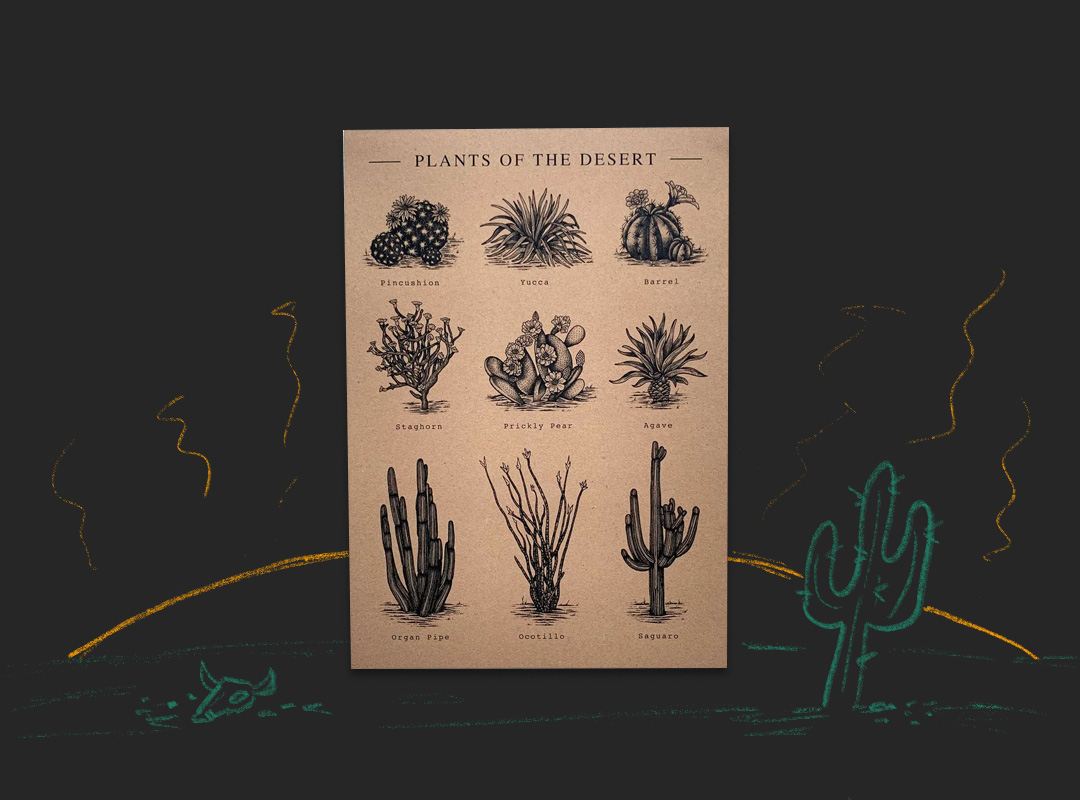 Poster with details illustrations of desert plants